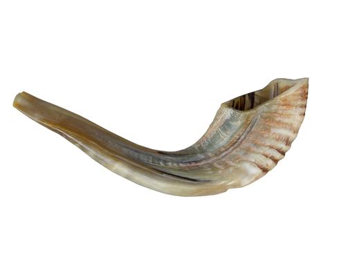 The Secret Shofar