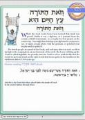Hineni Prayer Booklet - V'zot HaTorah/Eitz Hayyim Hi (Pack of 5)