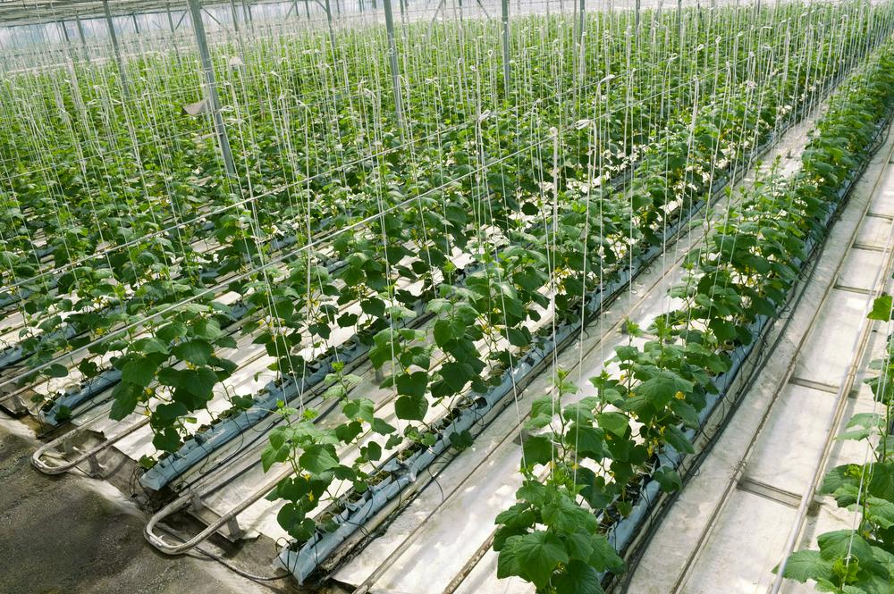 Выращивание огурцов гидропоника своими руками